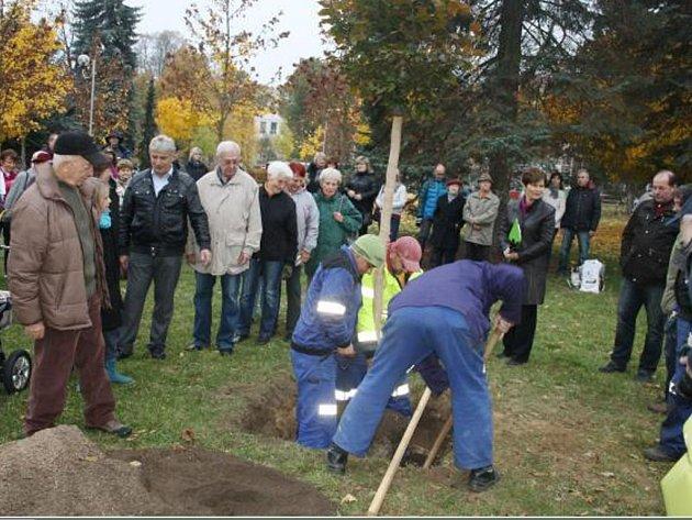 BUK ULOŽILI do připraveného lůžka v zemi pracovníci Západočeských komunálních služeb, každý z příchozích si pak mohl vhodit ke kořenům lopatu zeminy.