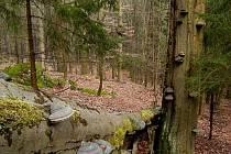 Pohled do Přírodní rezervace Broumovská bučina.