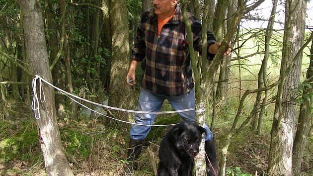 Křížence německého ovčáka našla v lese houbařka. Pes byl před smrtí.