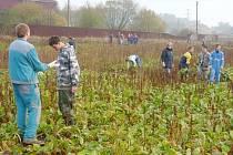 Do praxe patří také pomoc zemědělcům při sklizních.