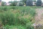 Rybník je v současné době zarostlý rákosem, na podzim by měla začít jeho revitalizace.