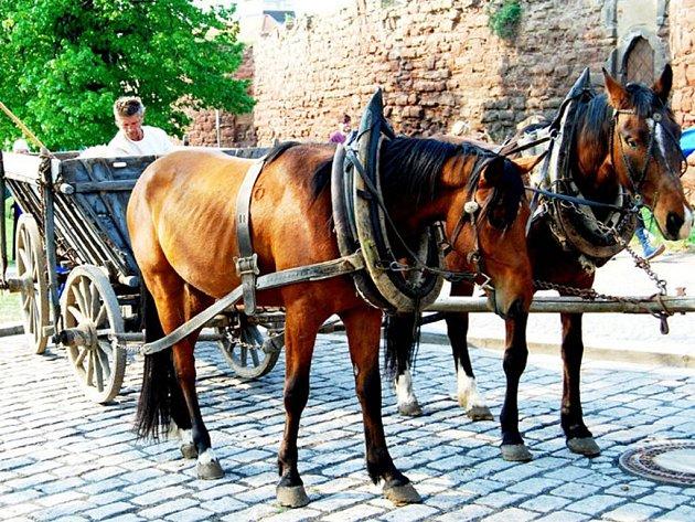 HUSITSKÝ VŮZ tažený koňmi vyjede v sobotu v 10 hodin z Tachova do Bärnau. Na snímku při startu v Českém Brodu.