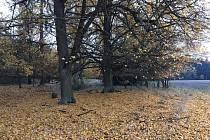 Podzim na Vlčí hoře.