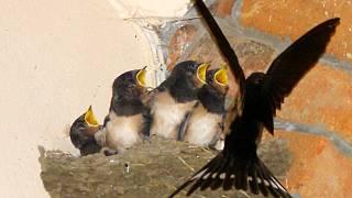 horké velké ptáky obrázky