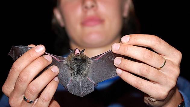 Noc pro netopýry v Michalových Horách