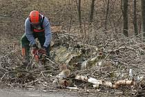 Pracovníci Správy a údržby silnic Plzeňského kraje prořezávají stromořadí podél silnice mezi Chodským Újezdem a Zadním Chodovem. Některé stromy bylo nutné i pokácet.