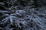 """V úterý, v den prvního ze tří """"zmrzlých"""" mužů, bylo v horních partiích Českého lesa bílo."""
