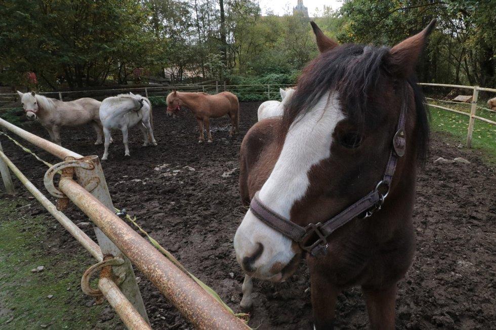 Z Pony farmy v Kladrubech...