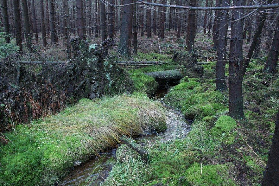 Kilometr pod pramenem  Tichá silně meandruje mezi malými stromky a vysokými drny.