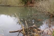 Do rybníku vytekla neznámá látka, ryby uhynuly