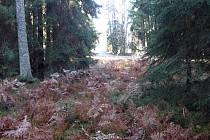 Podzimní čas v Českém lese u Lesné.