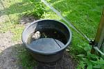 V sudech na vodu se ročně utopí desítky sýčků. Nejohroženější jsou nezkušená mláďata.