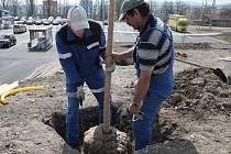 Omlazovací kůrou prochází v těchto dnech veřejná zeleň v Tachově.