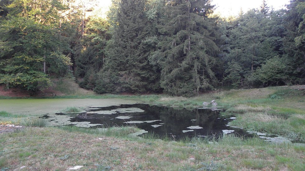 Pohled na lokalitu, kde byla nalezena parožnatka a zdrojovka potoční.