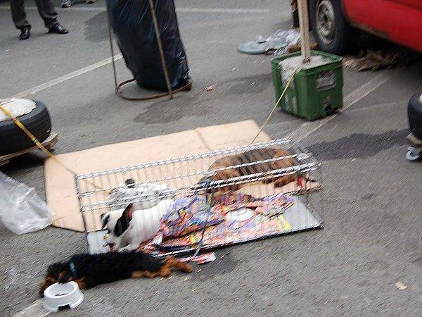 Bez možnosti pohybu ležela vlétě minulého roku ve Svaté Kateřině tato štěnata. Vietnamci je takto nabízeli kprodeji.