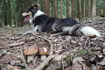 Taťána Rolínková z Tachova našla a vyfotografovala houby v lesích okolo Halže. Foto: Taťána Rolínková