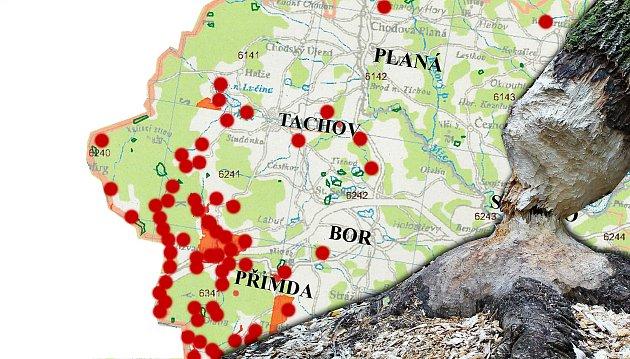 KAŽDÁ TEČKA ZNAMENÁ ZAZNAMENANOU ČINNOST BOBRA evropského na území Tachovska vposledních několika letech. Zde všude byl nebo žije největší náš hlodavec.