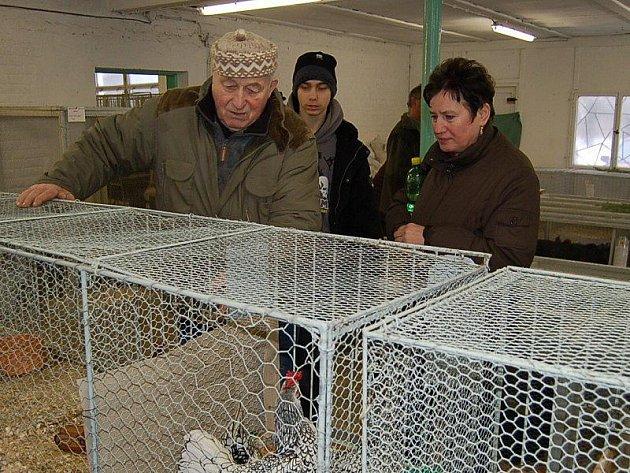 Z chovatelské výstavy v Tachově