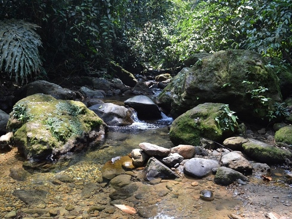 Snímek pralesa na sumatře.