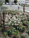 Lavičky a květinová výzdoba  v Tachově