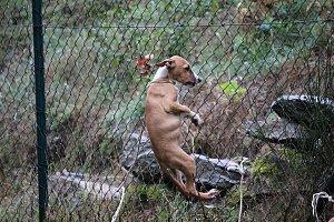 Psi byli přivázáni k plotu záchranné stanice zvířat.