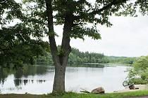 Kvalita vody Olšového rybníka v Brance je podle vyjádření odborníků v pořádku, mrtvé kapry má na svědomí jaterní vir.