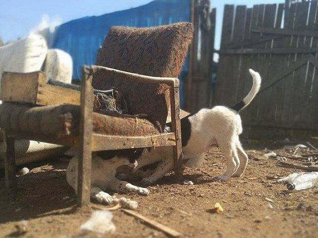 Fotografie prostředí ve kterém psi žili a z převzetí psů do útulků.