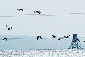 Ze sčítání ptactva na Tachovsku