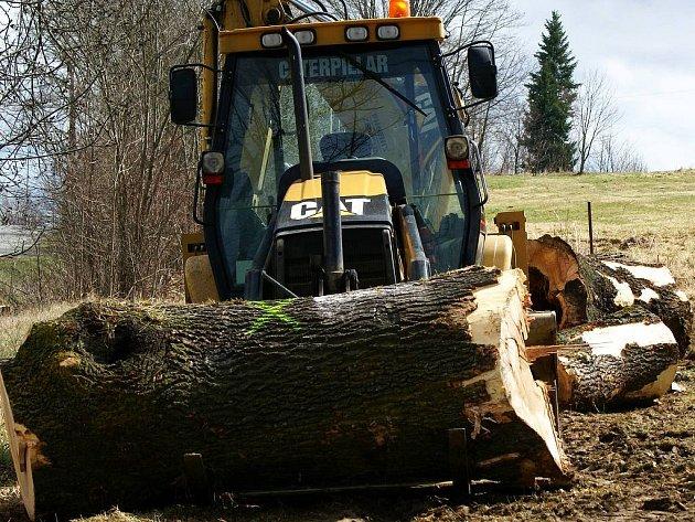 Prořezávka suchých větví čeká na stromořadí před Olešnou