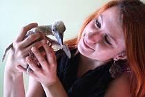 REDAKTORKA TACHOVSKÉHO Deníku Gabriela Jägerová (na snímku) se stala patronkou dvou mláďat čápa bílého.
