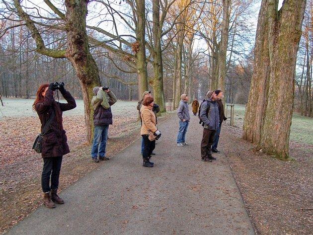 POČETNÉ HEJNO ČÍŽKŮ viděli účastníci při ornitologické procházky v aleji vedoucí v Tachově k Minerálce.