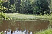 CHKO vyhlásilo Kolowratův rybník za přírodní pamaátku.