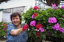 BAREVNÉ KRÁLOVSTVÍ. Zahradničení se Eliška Nejdlová věnuje celý život. Posledních deset let jsou středem jejího zájmu pelargonie, které nejen pěstuje, ale i vystavuje u sebe na zahradě v Trpístech.