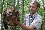 VELKÉ MALÉ MLÁDĚ, které má velikost slepice a tělesnou teplotu téměř čtyřicet stupňů. Na snímku autor článku Antonín Hříbal s mládětem luňáka.