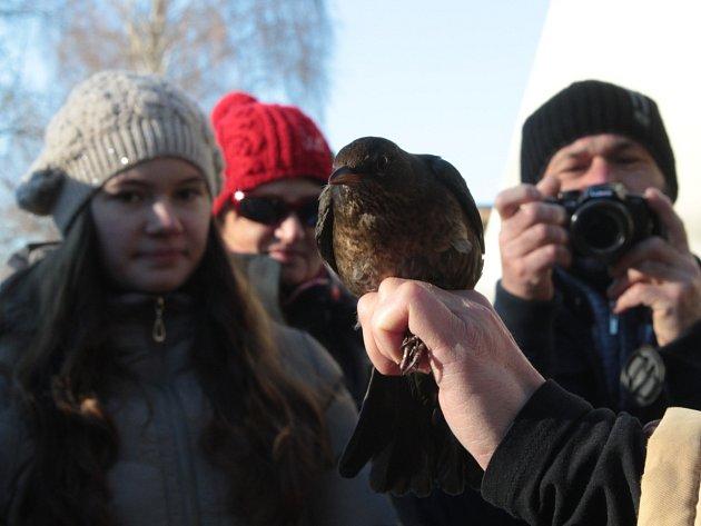 Ptáci v zimě nespí, přesvědčili se výletníci