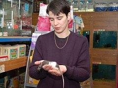 O  potkany  není  velký zájem, řekla nám  provozovatelka tachovské zooprodejny Martina Pelclová (na snímku).