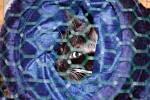 Mezinárodní výstava koček v Chodové Plané