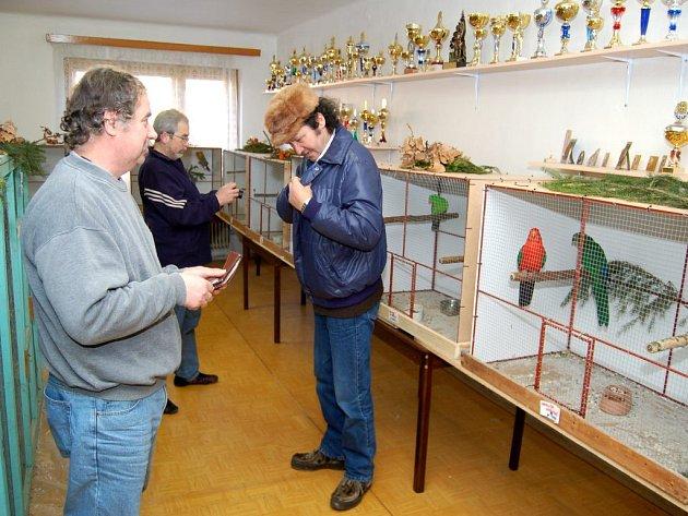Za velikého zájmu veřejnosti i znalců se o víkendu uskutečnila výstava okrasného ptactva ve Stříbře