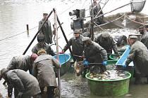Na vánoční stůl poputují kapři z Velkého hlinského rybníka, který ve středu lovili pracovníci borského střediska Klatovského rybářství.