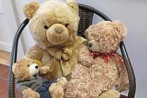 Kladrubské muzeum hostí velkou výstavu medvědů.