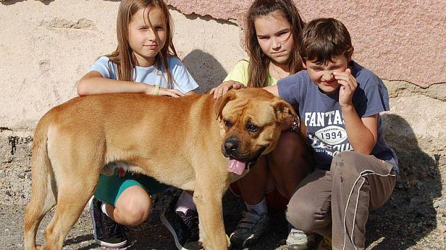 AKIM SI HRÁL S DĚTMI. Tříletý pes plemene brazilská fila, na jehož volné pobíhání si stěžovali někteří obyvatelé Starého Sedla, si v úterý po veterinární kontrole hrál s dětmi.
