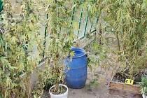 Pěstírnu marihuany našli policisté i v paneláku