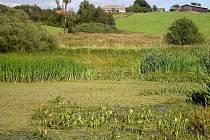Vodními a bahenními rostlinami zarostlý rybníček pod Týncem.