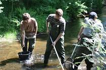 Pracovníci odborné firmy prováděli v sobotu průzkum Mže v úseku Tachova, aby zjistili jací živočichové v řece žijí. Objevili dokonce chráněné raky říční a mihule potoční i říční.