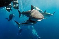 JEDNÍM z účastníků výstavy potápěčských fotografií je také František Pudil, autor tohoto snímku.
