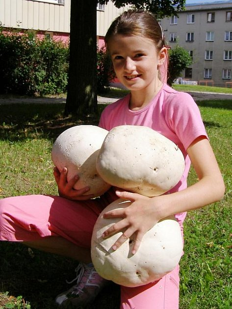 Devítiletá houbařka Kateřina Entová své tajné místo u Vlčí hory neprozradila.