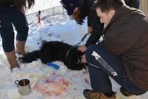 PANÍ byla ošetřena a koleno se jí zahojí snad brzy, s pořezaným psem je to ale o něco horší.