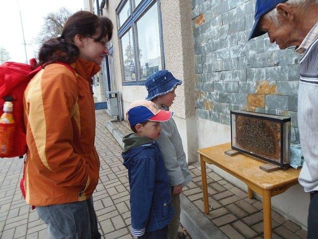 ATRAKCÍ PRO malé i velké návštěvníky medového jarmarku ve Stříbře se stalo včelstvo včelaře Antonína Balého ze Kšic.