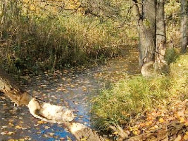 Krajina se stopami činnosti bobrů.