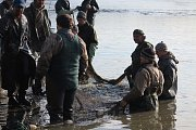 Rybáři na sytenském rybníku museli při výlovu pracovat rychle, rybám přílišné teplo nesvědčí.